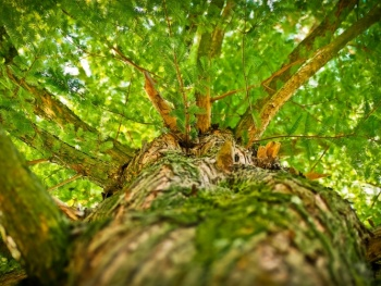 CSU Rosenheim Stadtratsfraktion: Schutz vor umstürzenden Bäumen im Stadtgebiet