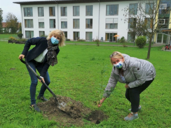Berliner Eiche steht jetzt in Rohrdorfer Seniorenwohnheim-MdB Daniela Ludwig  pflanzt Setzling im Garten  des Seniorenwohnens St. Anna